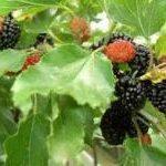 Las ramas y el fruto